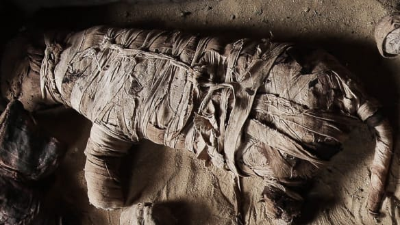 Taking your cat to the afterlife: mummified moggies found in Egypt