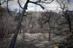 Fraser Island after the fires