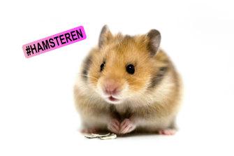 Hamsteren: Dutch-derived slang for hoarding.