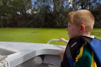 Noah Hindmarsh looks at a cyanobacterial bloom near Menindee on the Darling River earlier this month.