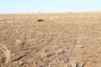 More than 35 horses have been killed at a property in Longreach.