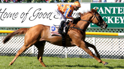Te Akau Shark ready to attack Cox Plate as Avilius in doubt