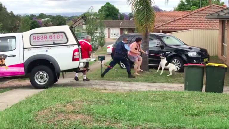 Police and rangers struggled to detain a large black and white dog who had attacked a five-year-old boy in Quakers Hill on Sunday afternoon.