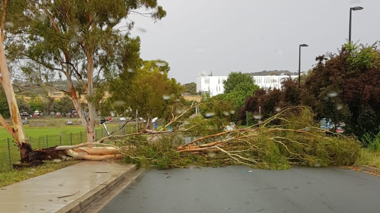 A tree fell across the road in Albermarle Pl, Phillip.