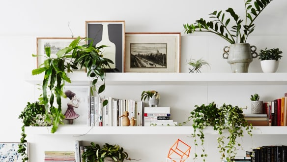 Indoor plants are more than just a pretty decoration, a new report says