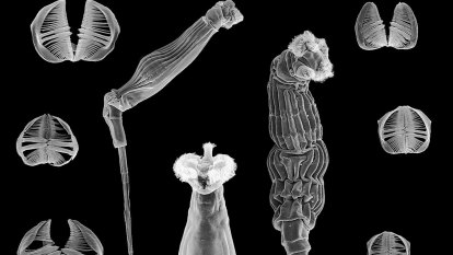 World's toughest animal frozen for 24,000 years, can still reproduce