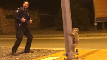 Townsville police were confronted by a pole-dancing koala.