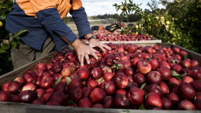 Better migrant worker policy grown locally