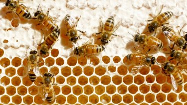Beekeeping regions across northern NSW and southern Queensland have been hard hit by the drought.