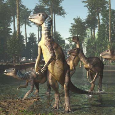 An artist's impression of a Weewarrasaurus identified by Phil Bell and his team at Lightning Ridge in Australia.