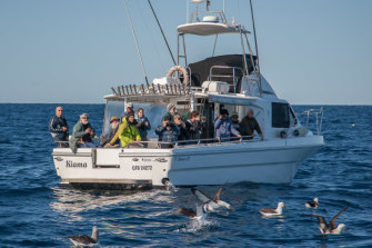 Citizen scientists at sea: Birdwatchers aboard the Kiama boat off the NSW coast.