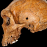 A tale of two skulls and their bones of contention