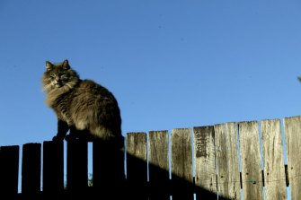The laws allow people to venture onto a neighbour's property to retrieve a lost ball, or cat.