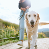 What the experts want you to know about your pet's wellbeing this summer