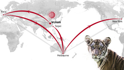 The same coronavirus strain turned up in an Australian and a tiger. How?