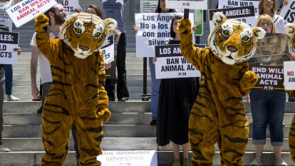 California lawmakers ban exotic animals at circuses