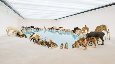 Cai Guo-Qiang's Heritage room was inspired by a trip to North Stradbroke Island in 2011.