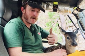 'Sounded like a small child crying': Baby deer rescued from bushfire