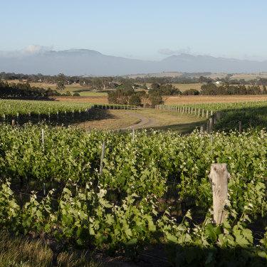 Best's in Victoria's Great Western wine-growing region.