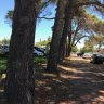Dying trees at Subi college building site spark fears for Gallipoli memorial pines