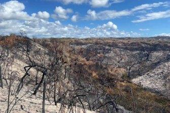 Scorched land on Fraser Island in late November.