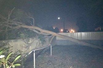 More fallen trees in Falcon.