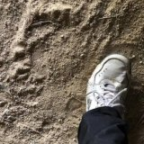 Mystery footprint in a cave in Pierces Creek Forest.