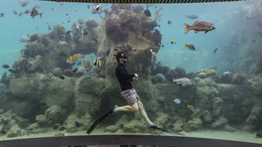 Daydream Island marine biologist Johnny Gaskell seen swimming with the sea life from the underwater observatory.