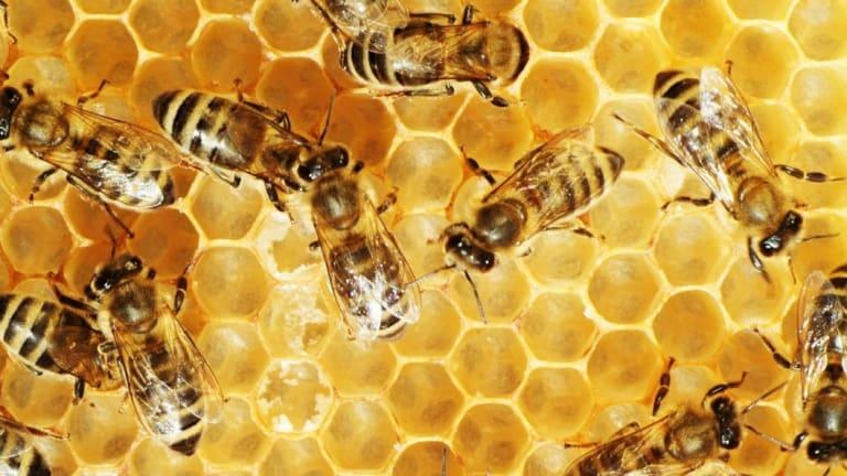 Bees do a lot more than make honey.
