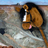 FIFO worker fails in bid to sue miner over Melbourne Cup hobby-horse race fall
