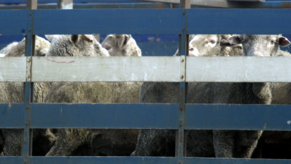 Department of Agriculture refuses to release live export footage