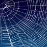 What does a spider's web 'sound' like? A performance lets you hear one