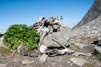 A pile of human bones at Roopkund Lake.