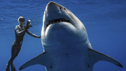 There's one thing great white sharks are really afraid of