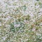Hail in Ridgewood, Perth.