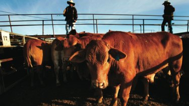 A number of Chinese investors own pastoral leases in the state's north.
