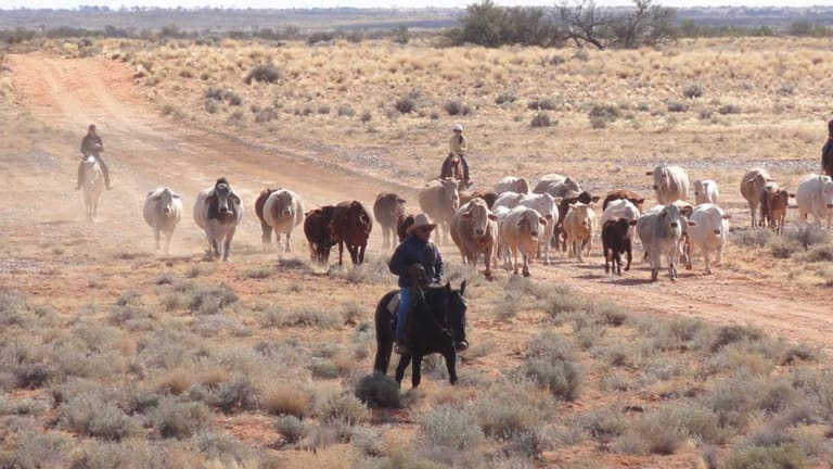 Gina Rinehart and her Chinese partner, Shanghai CRED, swooped on S. Kidman & Co in 2016, forming Outback Beef.