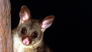 A man has been charged over animal cruelty after allegedly hurting a possum.