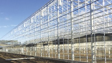 A Costa Group glasshouse