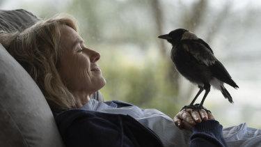 Strong start in cinemas: Naomi Watts in Penguin Bloom.