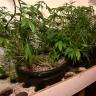 Police raid uncovers $200,000 worth of marijuana in Welshpool warehouse