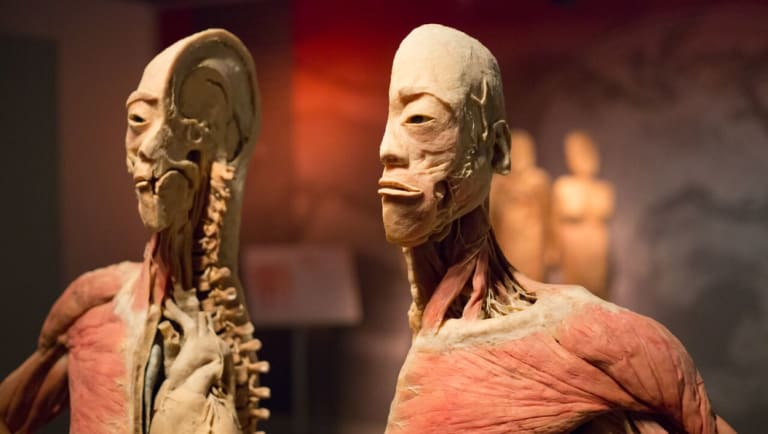 "The Real Bodies exhibition has labelled the accusations ""offensive"" and says it is a wonderful educational experience."