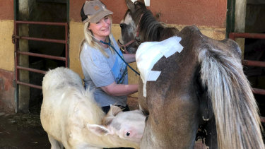 Jill Barton from Egypt Equine Aid.