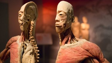One of the exhibits at Sydney's 'Real Bodies' exhibition. But who was he?
