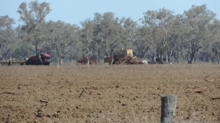 Last August, the government introduced the biggest changes to native vegetation laws in the state in more than two decades.