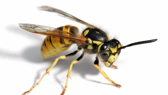 The 25-year-old woman spotted a wasp in her car and ended up off a bridge.