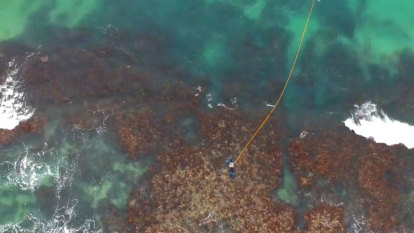 Marina plan will 'smash the jewel in the crown' of WA's abalone reefs, fishers claim