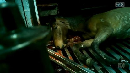 Luxury watch brand first major company to re-sign contract with VRC following horrific slaughter footage