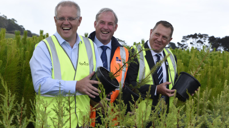 'I'm interested in growing more trees': PM announces $12.5m forestry boost - The Age image