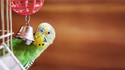 From foul-mouthed parrots to brown-nosing budgies, talk is cheep